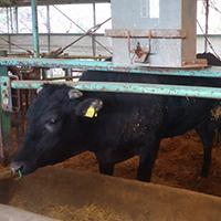 家畜の糞尿